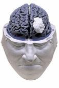 """""""Wir sind, was unser Gehirn ist"""""""