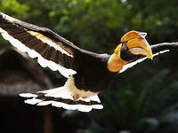 Indonesiens artenreiche Vogelwelt schrumpft rapide
