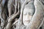 Fotos: Zwischen Buddha und Daimler- S�dbadische Unternehmer in Thailand
