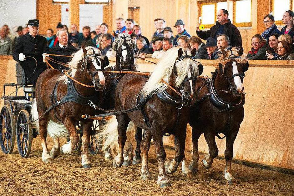 Beim Treffen der Schwarzwälder Pferdezuchtgenossenschaft drehte sich alles um die Vierbeiner, besonders die Deckhengste. (Foto: Wolfgang Scheu)