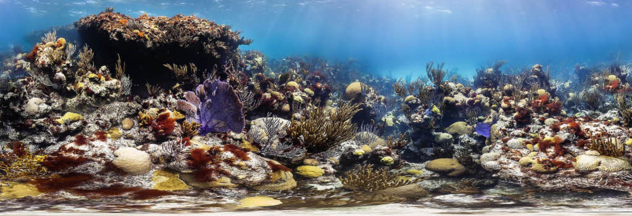 Atemberaubend Korallenriff Färbung Fotos - Framing Malvorlagen ...