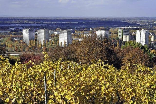 Letzte Etappe des Breisgauer Weinweges beginnt in Lahr und endet in Diersburg