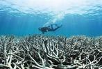 Fotos: Korallenbleiche im australischen Great Barrier Reef