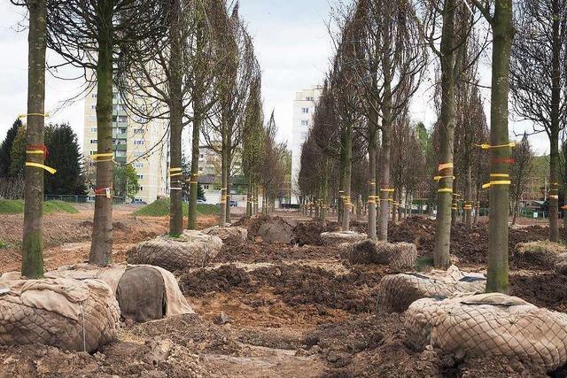 Lahr investiert 50 Millionen in die Landesgartenschau
