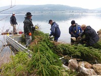 Laichhilfe f�r die Fische: Angler versenken Tannen