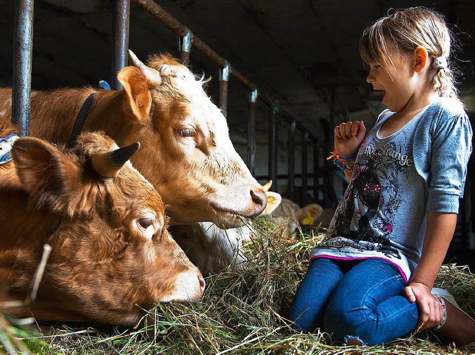 Die Kühe, das duftende Heu –  Stadtkinder  lieben das.   | Foto: dpa/Ehmann