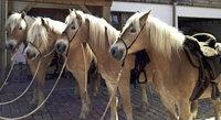 Wellness f�r Mensch und Pferd