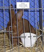 Kaninchenzuchtverein: M�nstert�ler feierten Erfolge auf Bundesebene