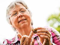 Delikatesse: Wo kommen all die Weinbergschnecken her?