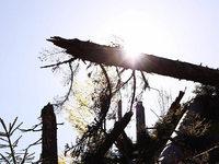 Fotos: Ein Jahr nach dem Tornado am Feldberg