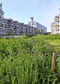 Das neue Basler Erlenmattquartier ist eine gr�ne Insel in der Stadt