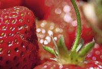 Erdbeerfest in Oberkirch