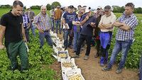 70 Tage nach der Pflanzung gibt es die ersten Fr�hkartoffeln