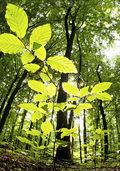 Touren durch Wald und Park