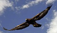 R�ckkehr des Nationalvogels