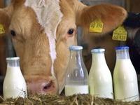 """""""Wir haben zur Zeit ein �berangebot am Milchmarkt"""""""