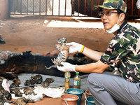 40 tote Tigerbabys – Thailand ist schockiert