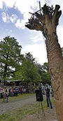 K�nstler Thomas Rees schafft Baumskulptur f�r Waldhockplatz