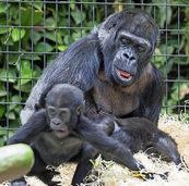 Primaten sollen unversehrt bleiben