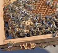 Tag der offenen T�r am Lehrbienenstand L�ffingen