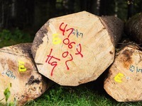 Freiburger Forstamt meldet zwei Millionen Euro Verlust