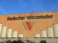 Badischer Winzerkeller steigert 2015 den Umsatz