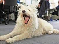 Hund im B�ro: Wie ist die rechtliche Situation?
