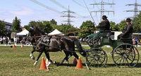 Spannender Pferdesport