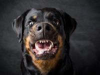 Lahr: Hund bei�t Radfahrer ins Genick - und wird aufgehetzt