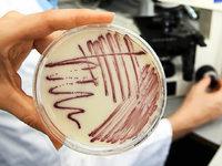 T�binger Forscher entdecken neues Antibiotikum