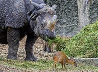 Zuwachs bei Munjaks im Basler Zoo