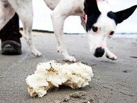 Paraffine verschmutzen die Str�nde der Nord- und Ostsee