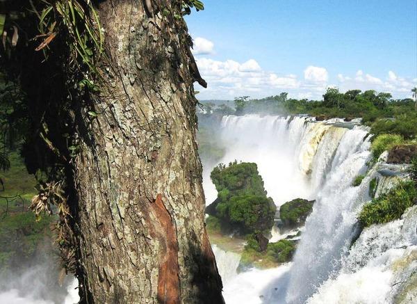 Karl-Heinz Wiederhold: Die Aufnahme entstand während unser Ferien an den Wasserfällen des Iguasu in Argentinen. Zu beachten ist die Eidechse im Vordergrund am Baumstamm.