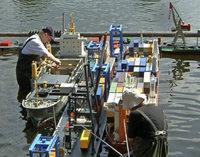 Modelschiffe, Unterhaltung und Feuerwerk am Badweiher in St. Peter