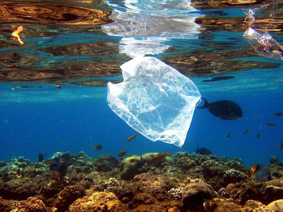 In den Meeren der Welt schwimmt Plastikabfall.   | Foto: dpa