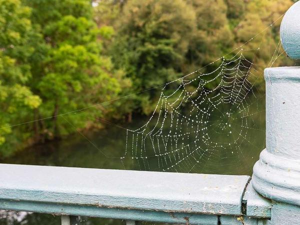 Franz Wieber: Spinnennetz an einem Brückengeländer.