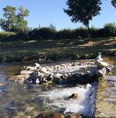 FLUCHTPUNKT: Steinm�nnchen am Whirlpool