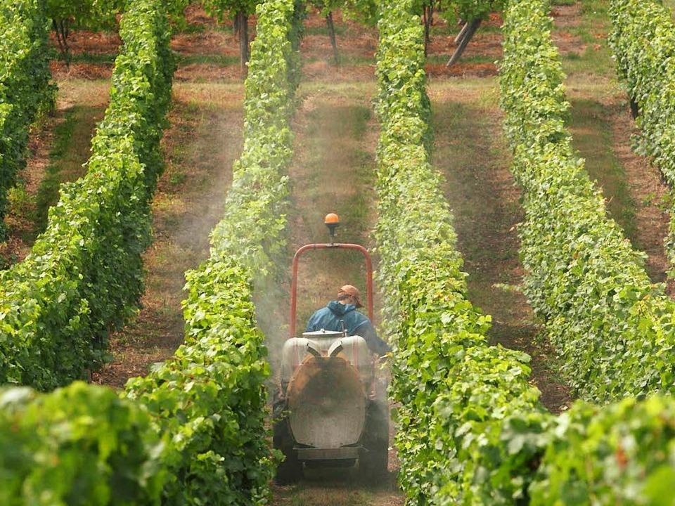 Ein Bauer versprüht Pflanzenschutz im Elsass.  | Foto: dpa