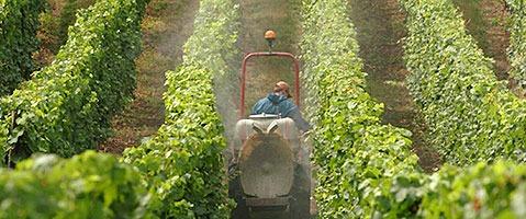 Bauernverband: Chemie hat Badens Ernte gerettet