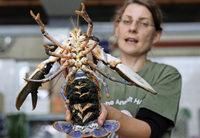 Hummerprogramm soll Meerestiere retten