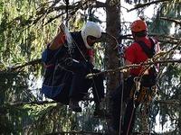 Gleitschirmflieger st�rzt ab und wird aus Baumwipfeln gerettet