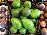 Globaler Hei�hunger auf Avocado zerst�rt W�lder in Mexiko