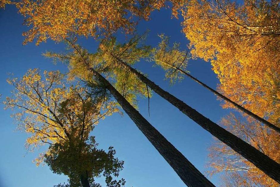 Helge Friedlein: Wald bei Kandern - Die Bäume sind in der Perspektive krumm aber in Wirklichkeit doch gerade. (Foto: Helge Friedlein)