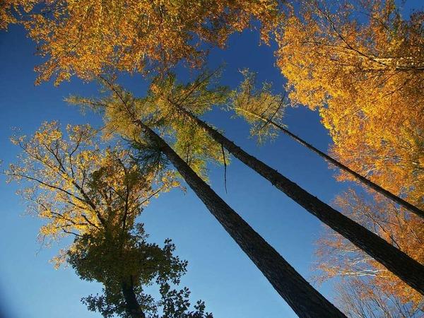 Helge Friedlein: Wald bei Kandern - Die Bäume sind in der Perspektive krumm aber in Wirklichkeit doch gerade.