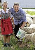Attraktion ist die Schafschur