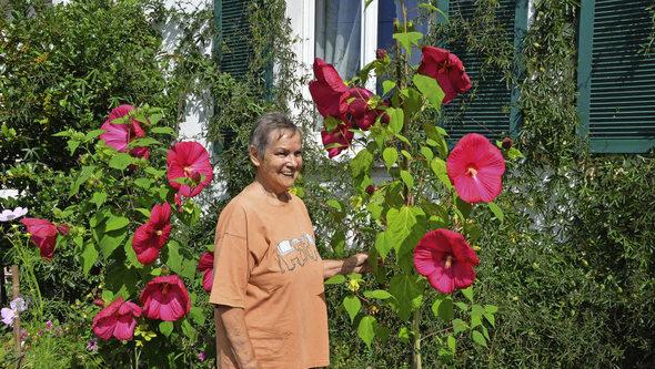 riesen hibiskus sorgt f r bewundernde blicke grenzach wyhlen badische zeitung. Black Bedroom Furniture Sets. Home Design Ideas