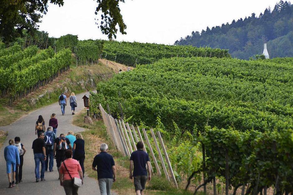 Genuss zwischen Wald und Reben: der 18. Offenburger Weinwandertag 2016 (Foto: Ralf Burgmaier)