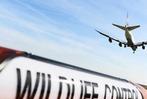 Fotos: So sch�tzt man Flieger vor V�geln am Flughafen