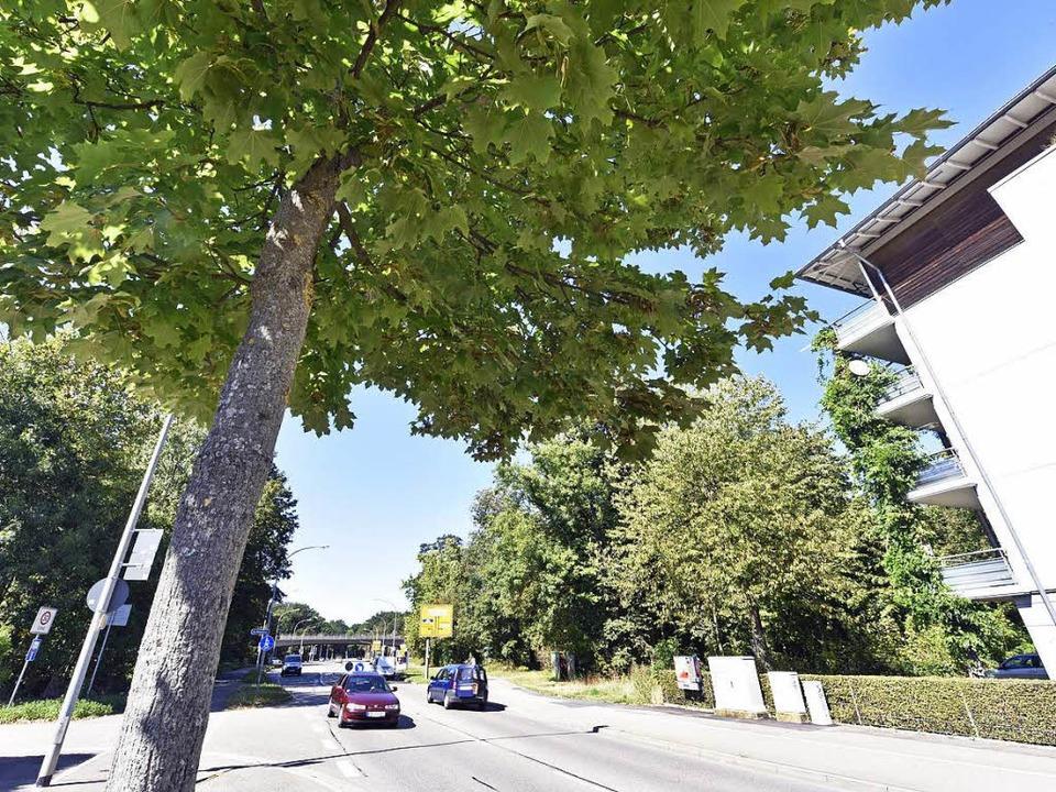 Links und rechts der Elsässer Straße s...Mooswald Bäume für Wohnungen weichen.   | Foto: Michael Bamberger