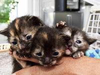 Drei Katzenbabys �berleben Fahrt von Frankfurt nach Freiburg im Radkasten eines BMW